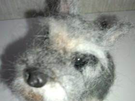 羊毛ドッグ ミニチュアシュナウザー