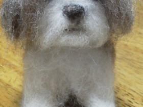 羊毛ドッグ シーズ