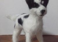 羊毛ドッグ ミックス犬