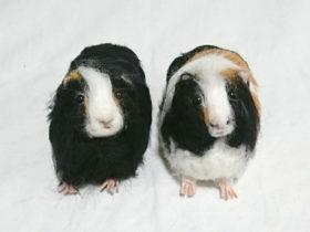 バズちゃん&ウッディちゃん